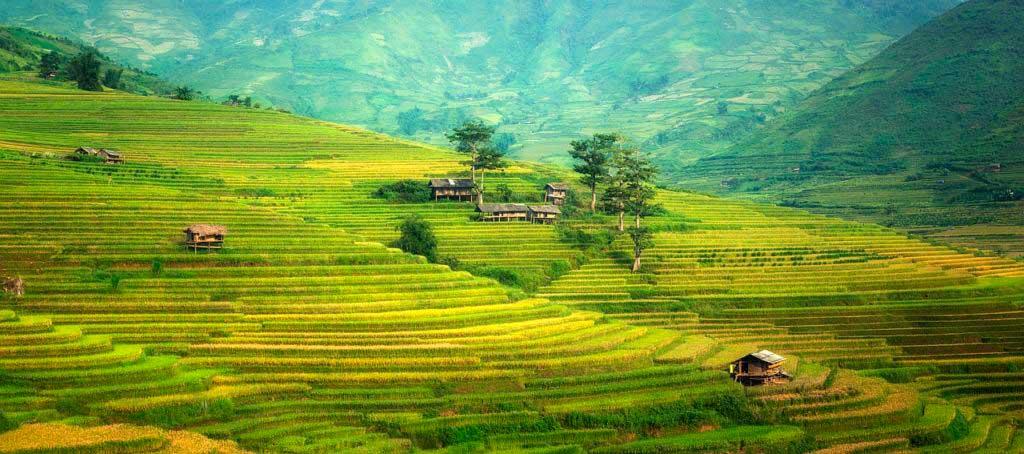 paesaggio verde collina vigneti vitigni