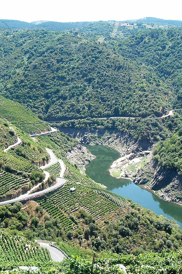 paesaggio colline vigneto vitigno piante uva viti con lago