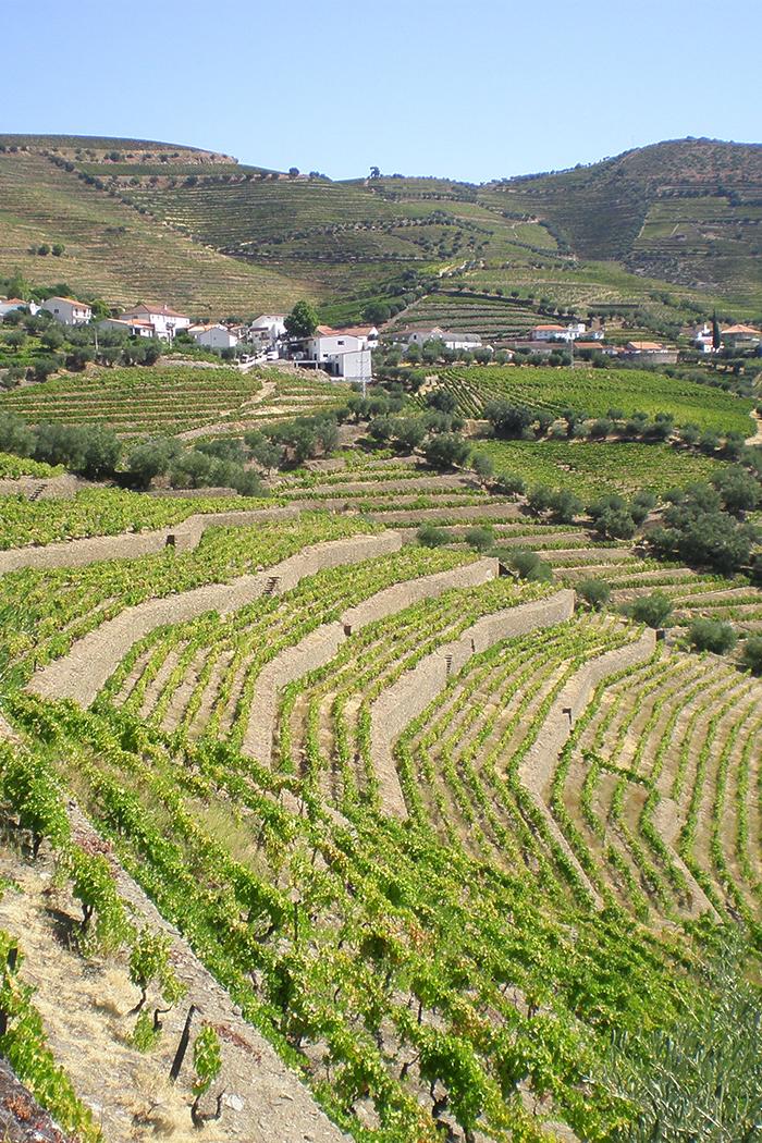 paesaggio vigneti colline terrazzamenti di viti
