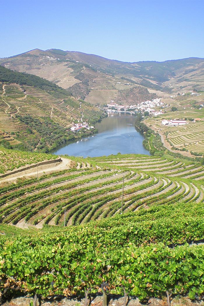 paesaggio vitigni lago colline piante di vite uva