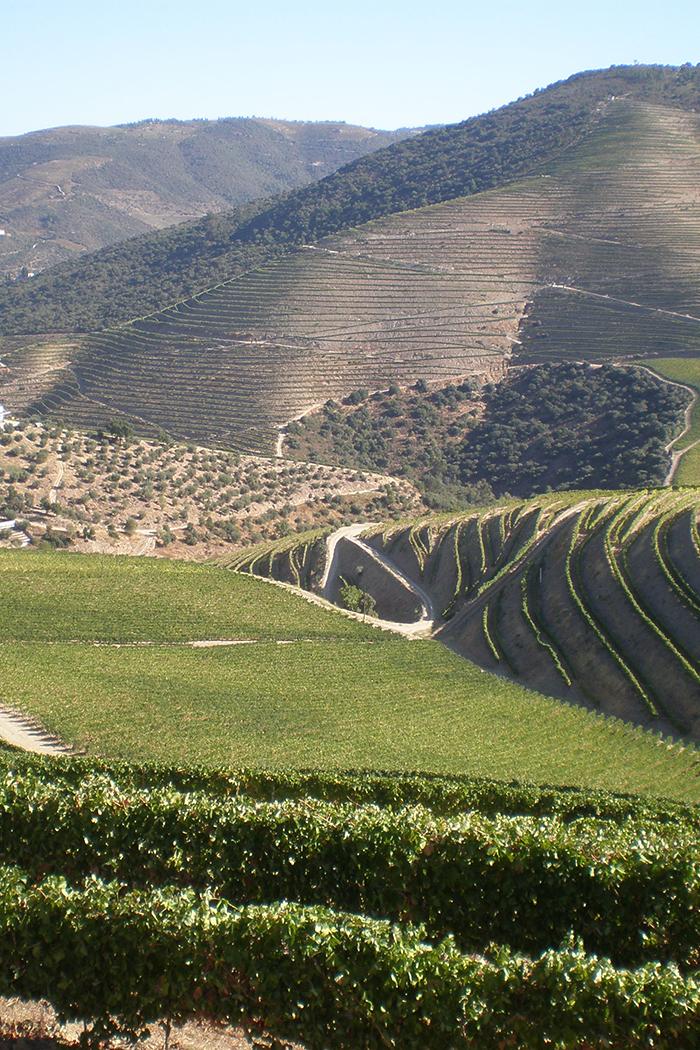 paesaggio trincadeira duoro vite vitigno