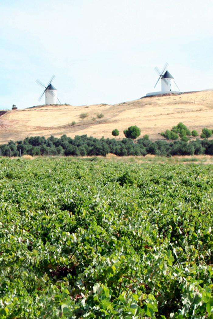 paesaggio verde piante alberi mulino a vento viti vigneti pianta uva
